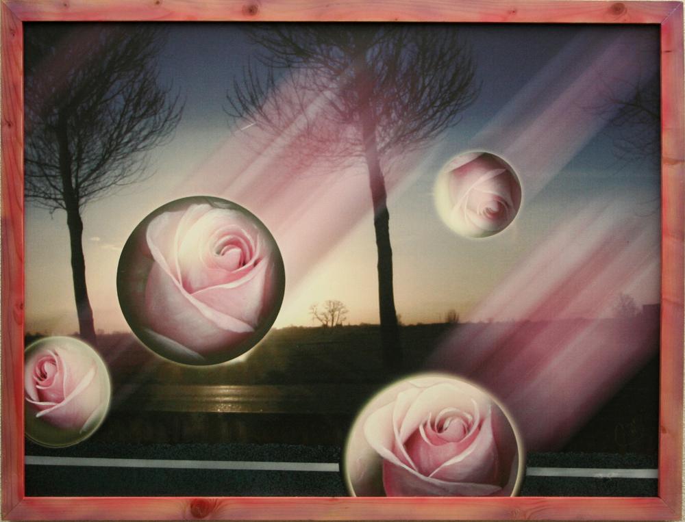 rozenregen